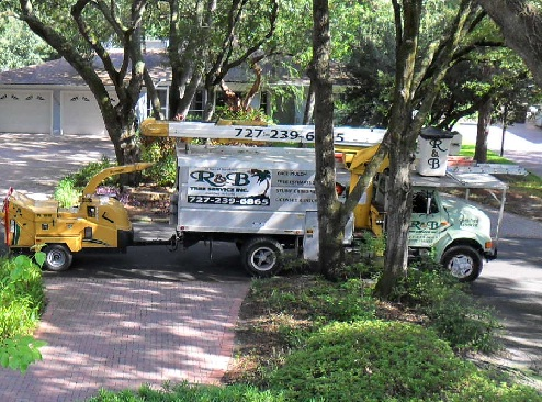 tree service for st.petersburg-clearwater area call 727-239-6865